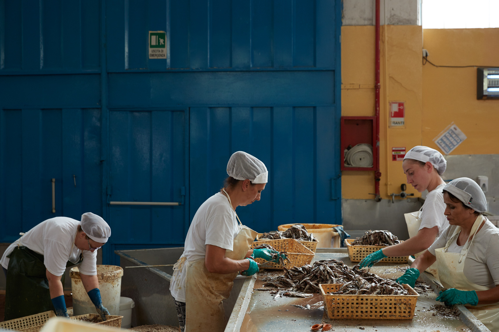 Autentico: The Anchovy Workers