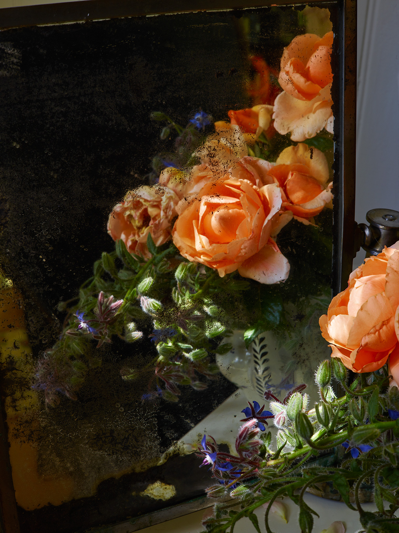 Flowers: Apricot Roses