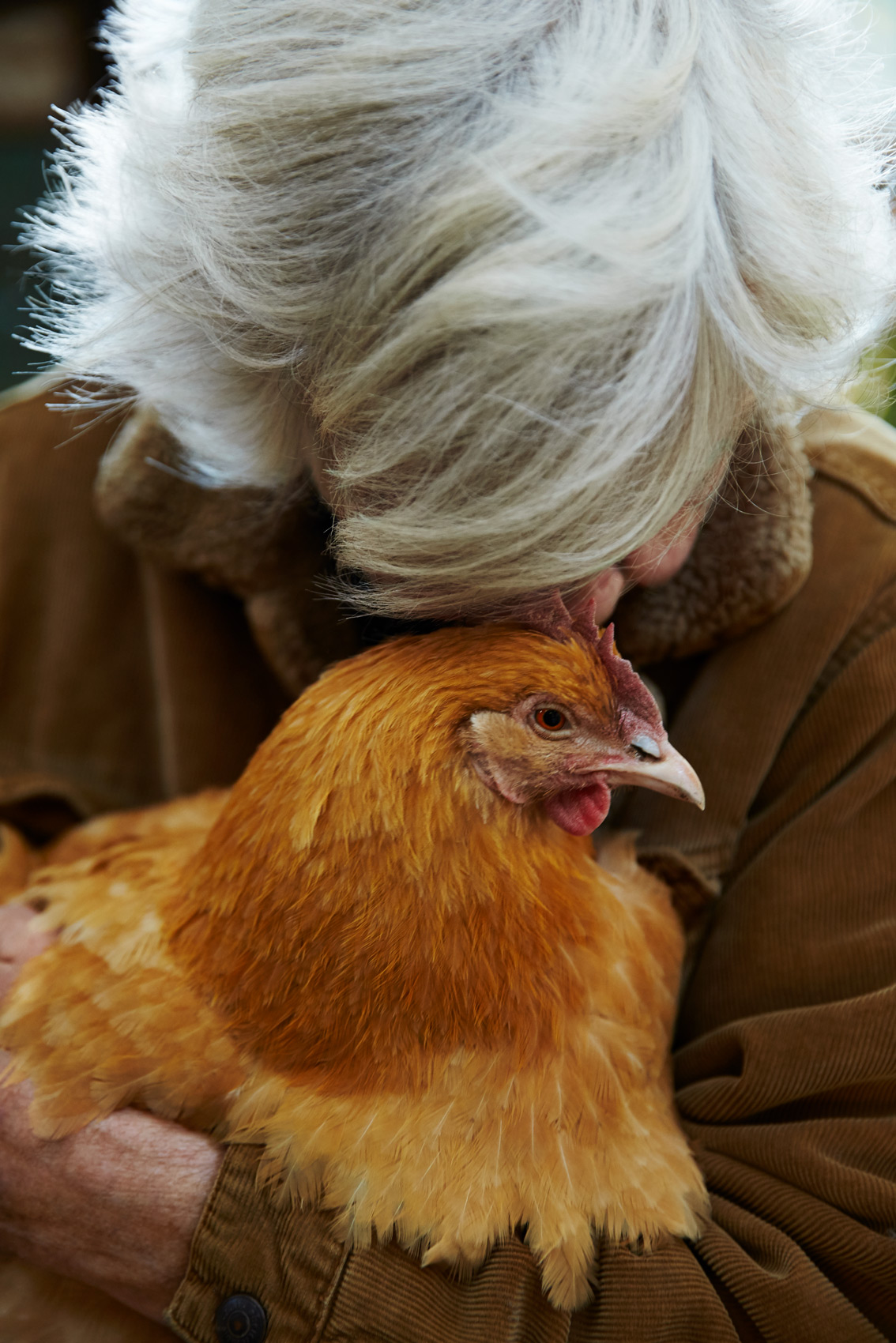 Lifestyle: The Chicken Whisperer